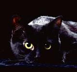 El Gato Negro – Edgar Allan Poe
