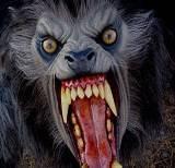 Hombre Lobo Imagenes de Terror