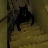El Demonio en la Escalera Imagen de Terror