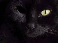 gato negro sin un ojo